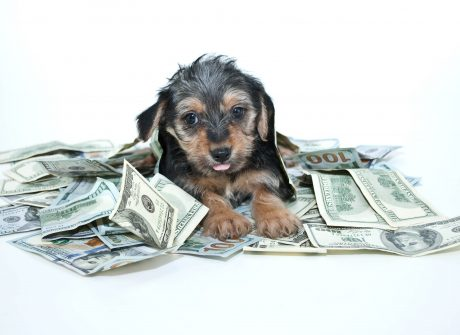 pet in a pile of cash